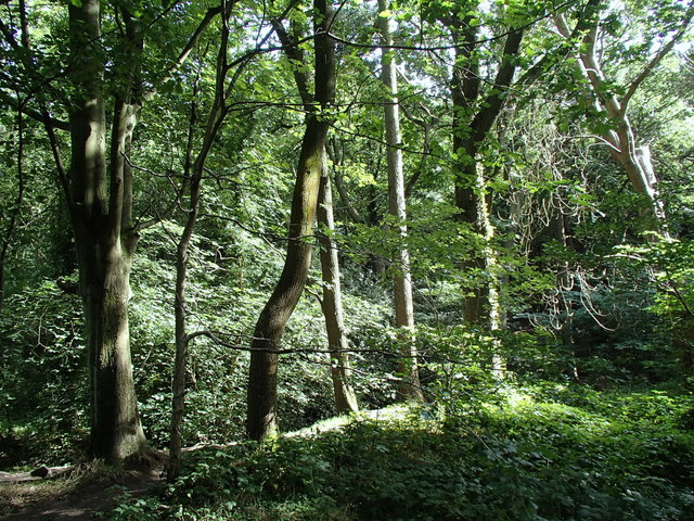 Trees at the edge of Ecclesall Wood