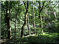 SK3182 : Trees at the edge of Ecclesall Wood by Andrew Hill