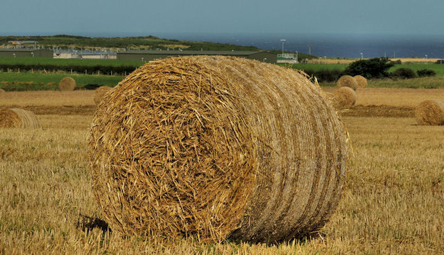 Hay bales near Portrush (1)