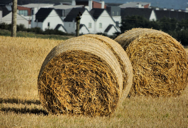 Hay bales near Portrush (2)