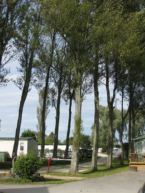 Tall trees at the caravan and camping site