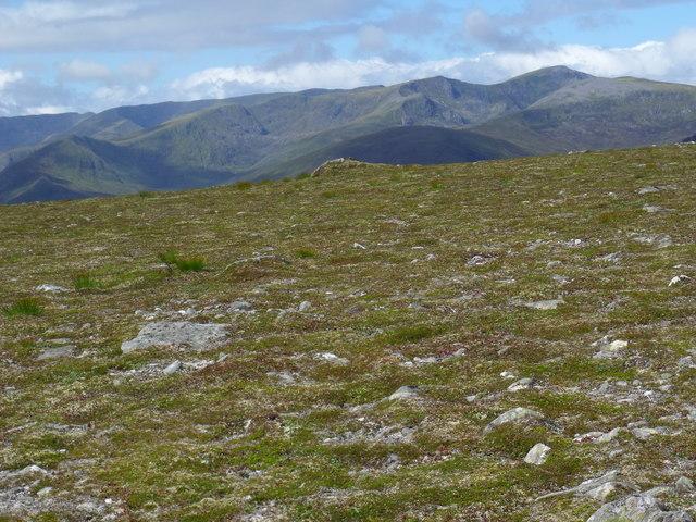 Tundra-like vegetation...