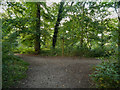 SJ6576 : Marbury Country Park, Big Wood by David Dixon