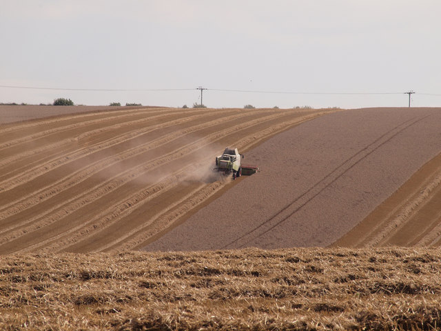 Combining Wheat on Beacon Hill