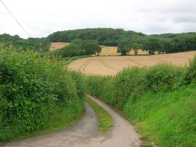 Country lane near Willis Hill