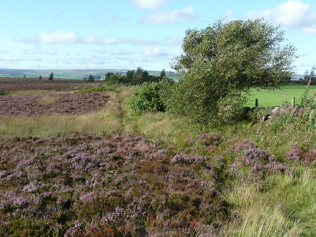 Path along the edge of Norland Moor