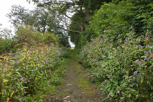 Footpath to Cat Tail House