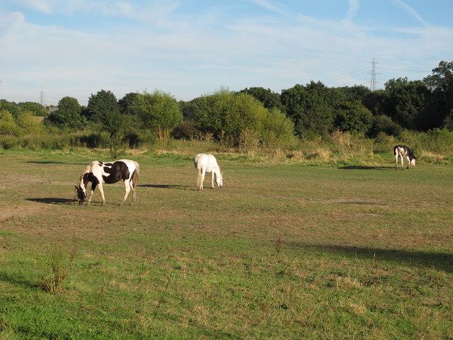 Horses near Mar Dyke