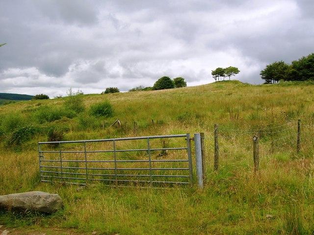 Rough grassland near Gelli'r-haidd-uchaf