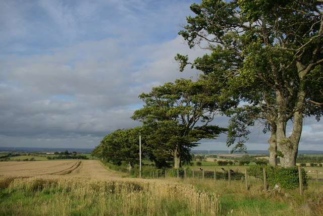 Field & trees by Udston Road