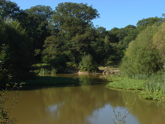 Pond, Bookham Common.
