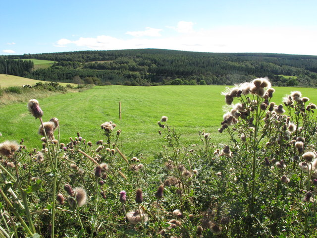 Field and Woodland near Todholes
