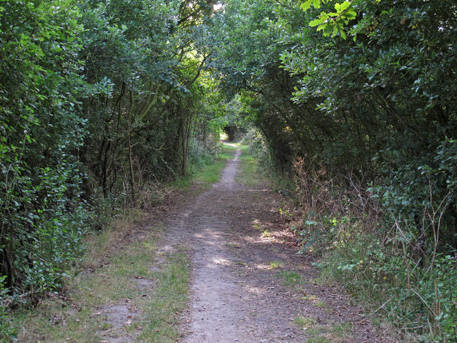 Path through the wooded boundary