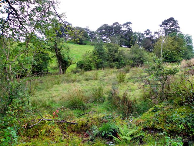 Rough ground, Cavanacaw Lower