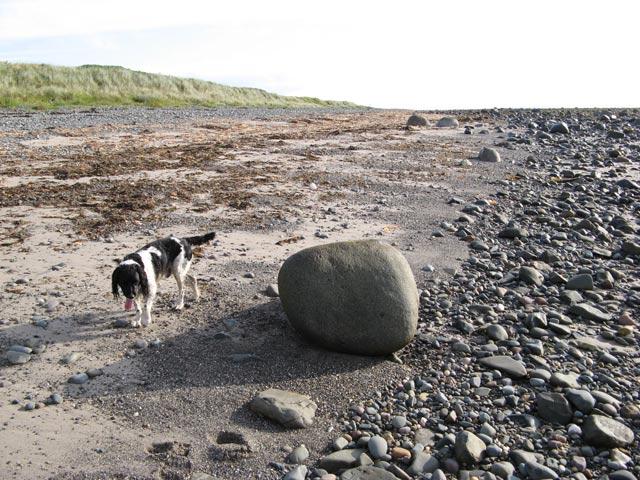 Granite erratic boulders