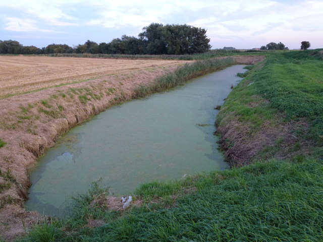 Algal bloom on a drain off Horsemoor Road near March
