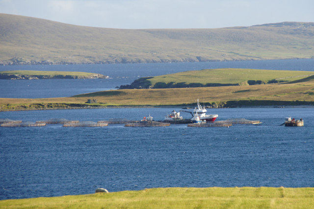 MV Norholm at fish cages off Uyea