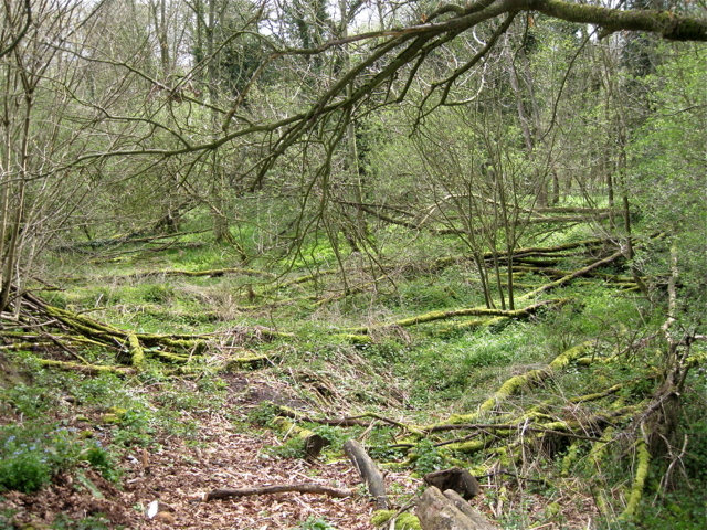 Derelict wet woodland, Bannerly Pool