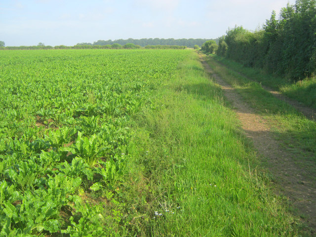 The Viking Way north of Coleby