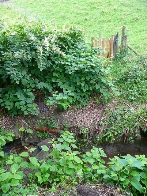 Hebden Royd FP31 crossing a stream near Wadsworth Royd Farm