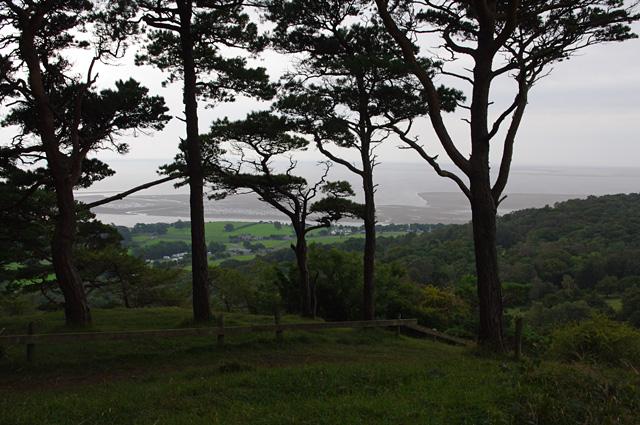 Scots pines, Arnside Knott