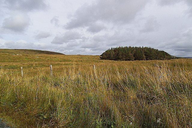 Looking over rough land to a coniferous plantation - Dooey Townland