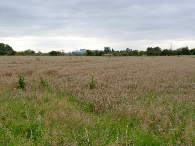 Cornfield off Bowbridge Road