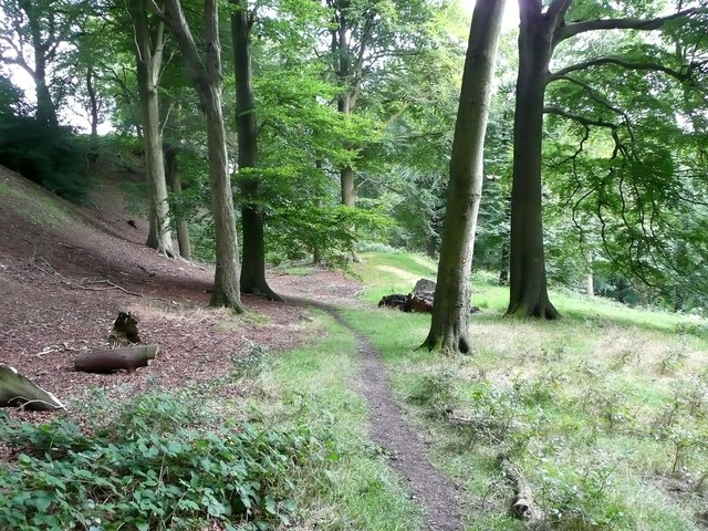 Footpath in Broad Bottom Wood