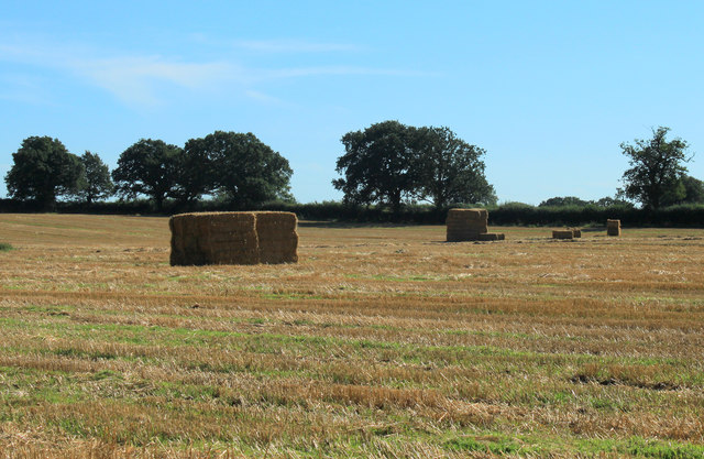 2012 : Baled straw in a harvested field