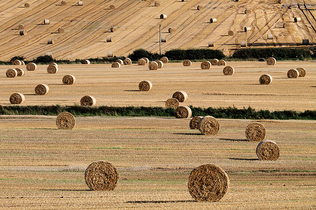 Harvest bales at Whitehillfoot