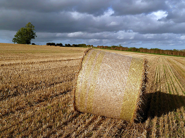 A round bale in a stubble field