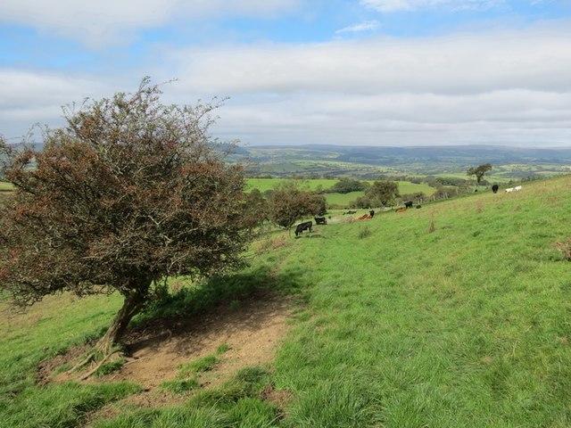 Llwybr Cnwch Path