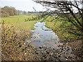 SU9199 : River Misbourne from Suffolk Bridge by michael