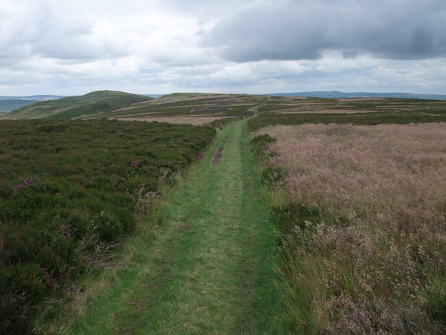 St Cuthbert's Way heading east from Gains Law
