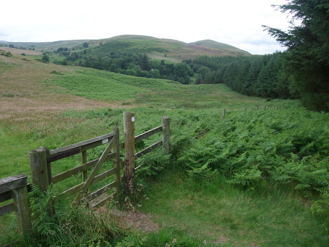 Looking north-west towards the Cheviots from the plantation on Kenterdale Hill
