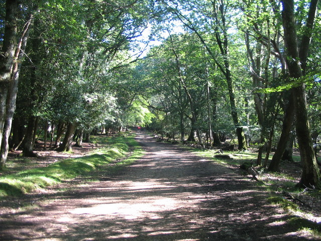 Cycle route through Hollands Wood