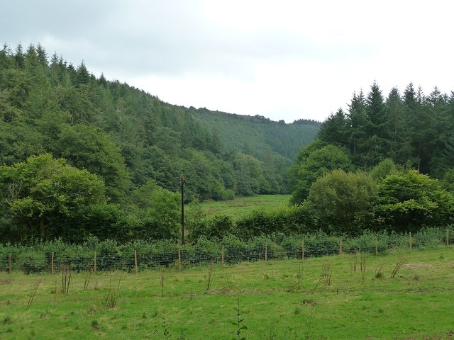 Nutcombe Bottom - view eastwards