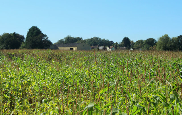 2012 : Maize field east of Upper Seagry