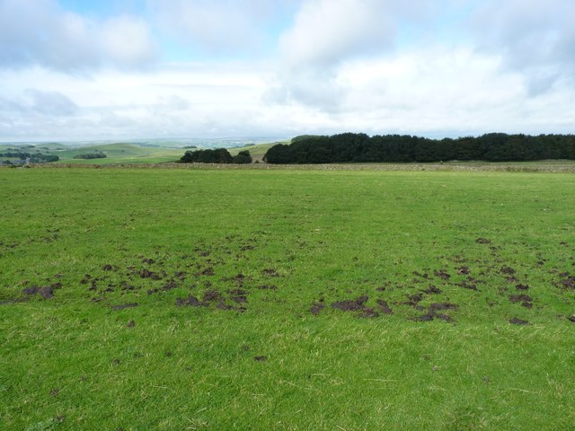 Grassy pasture on Hawks Low hill
