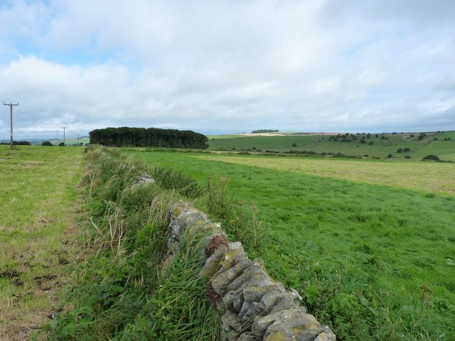 Drystone wall and fields on Hawks Low Hill