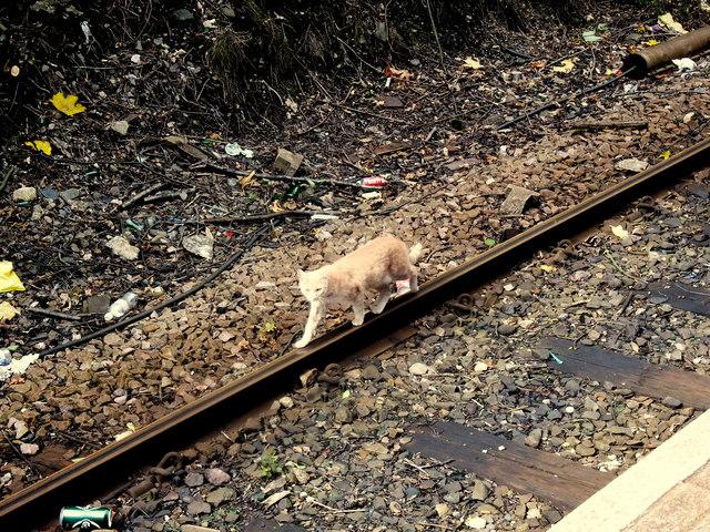 'I'll walk the line'