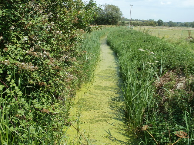 Algae-covered rhyne, Locking