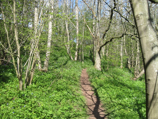 Footpath  through  Wormrigg  Wood