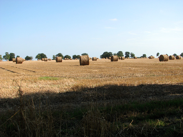 Baled straw south of Holloway Lane