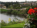 NT8440 : River Tweed by Coldstream by Colin Smith