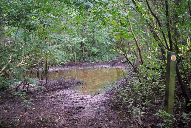 Damp Path in Thornfield Wood