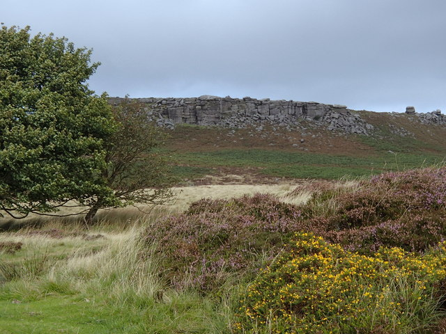 Gorse and heather in bloom, Hathersage Moor