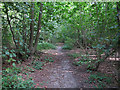 TQ5682 : Path in White Post Wood by Roger Jones