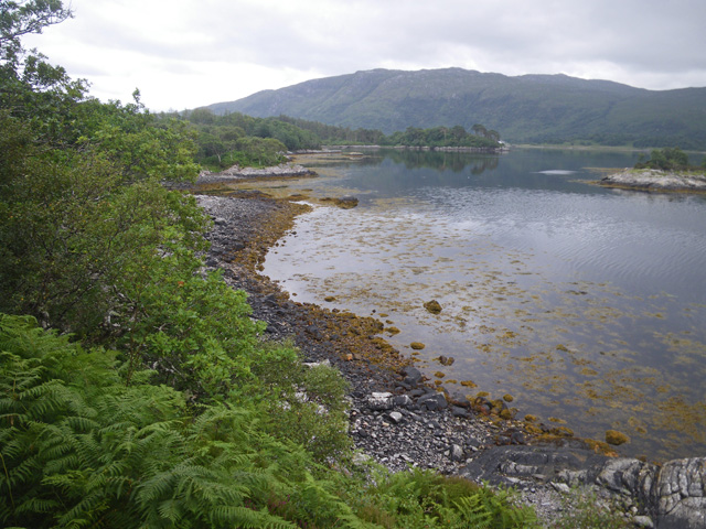 Quiet water along the shoreline of Loch Sunart
