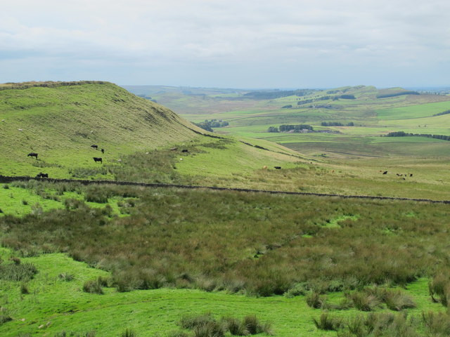 Rough pastures north of Hadrian's Wall